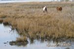 Two of a small herd out in the marsh.