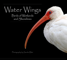 Water Wings Hardcover