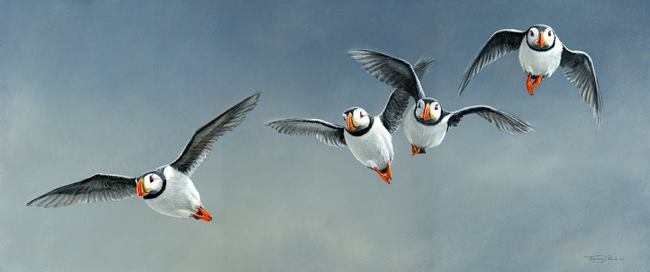 © Jeremy Pau,l Flight of Puffins, 25x10 acrylic